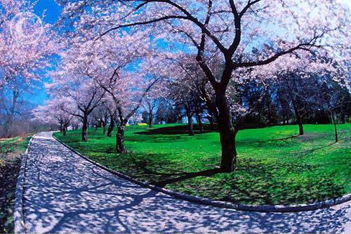 Vẻ đẹp mùa xuân ở Toronto, Canada