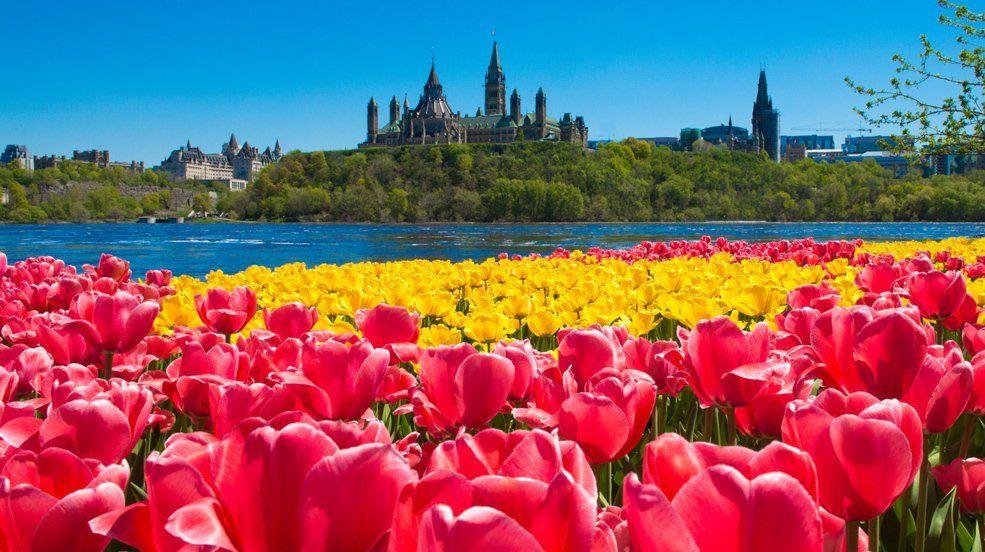 Cánh đồng hoa ở Quebec Canada